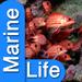 Marine Life Aa