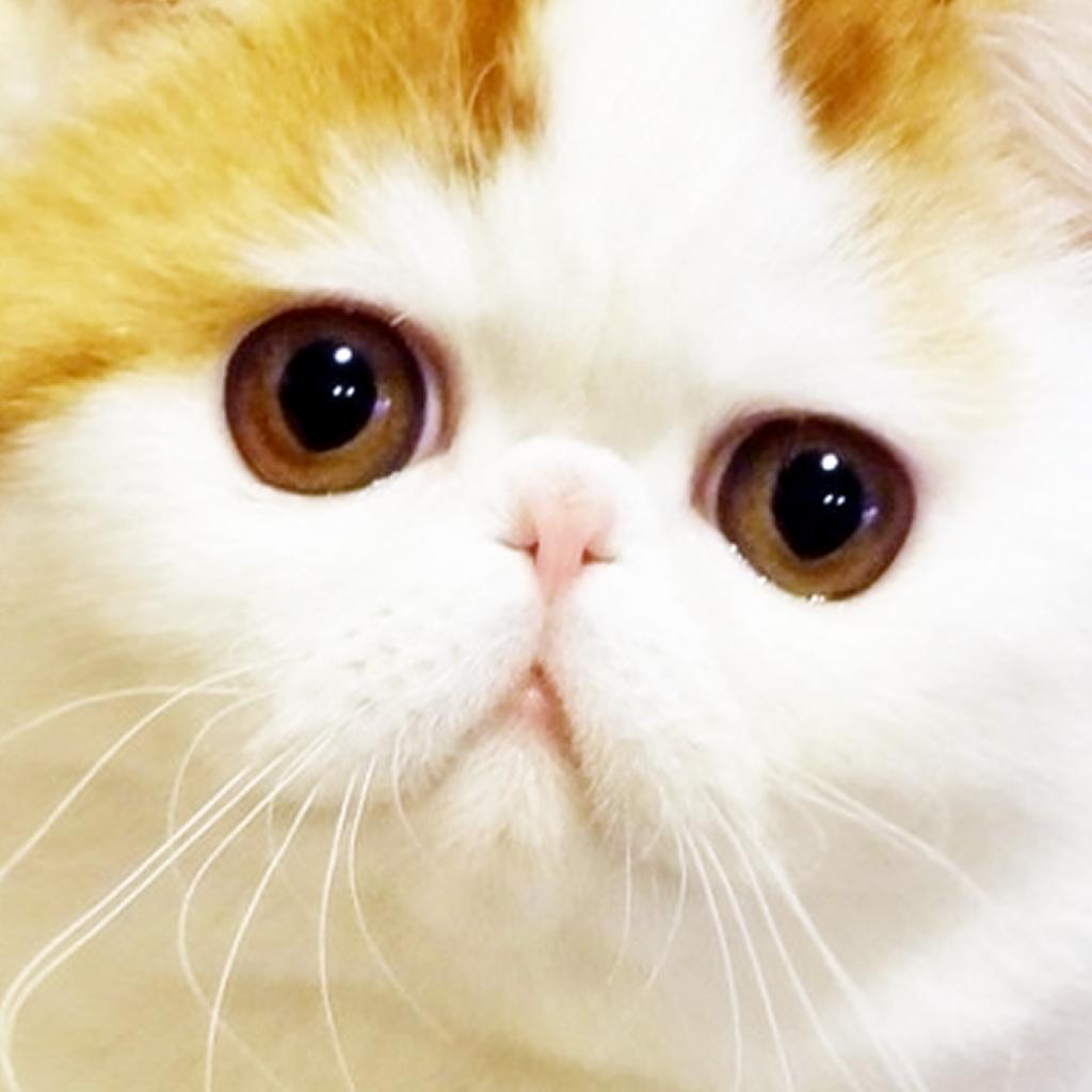 萌物控 – 萌控们的聚集地,天然呆,萌宠,猫叔,可爱小猫小狗(支持4-Inch)